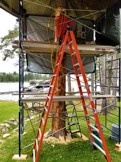Spruce Carving Anglin Lake 2018   .....Photography by K Davidson - Doris on scaffold
